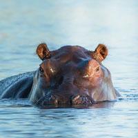 Protección de la fauna en destino
